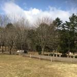 白老ポロトの森キャンプ場(北海道白老町)に行ってみた!