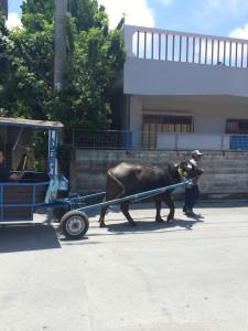 沖縄備瀬崎の水牛車