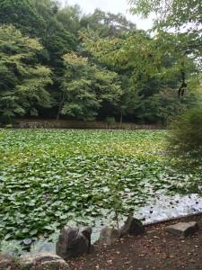 北海道安平町鹿公園での沼
