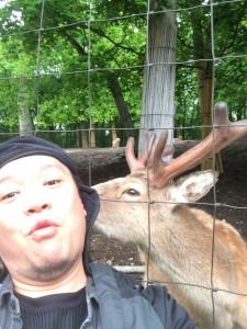 北海道安平町鹿公園キャンプ場に行ってみた