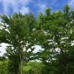 鹿公園キャンプ場(北海道安平町追分)に行ってみた!
