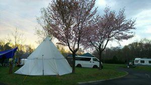 まあぶオートキャンプ場の桜の木