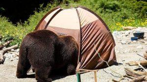 熊がテントを襲ってきたら