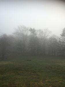 白老キャンプ場の幻想的な風景