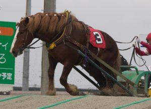 キャンプ王とばんえい競馬