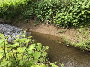 プライベートキャンプ場に川が流れてる